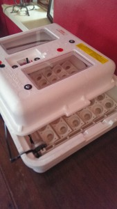 Incubator ready to use.
