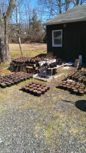 Plants ready for sale.