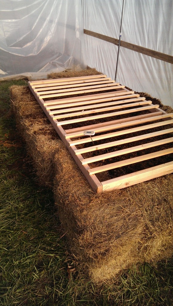 Seed starting area built from hay and fresh horse manure in greenhouse.
