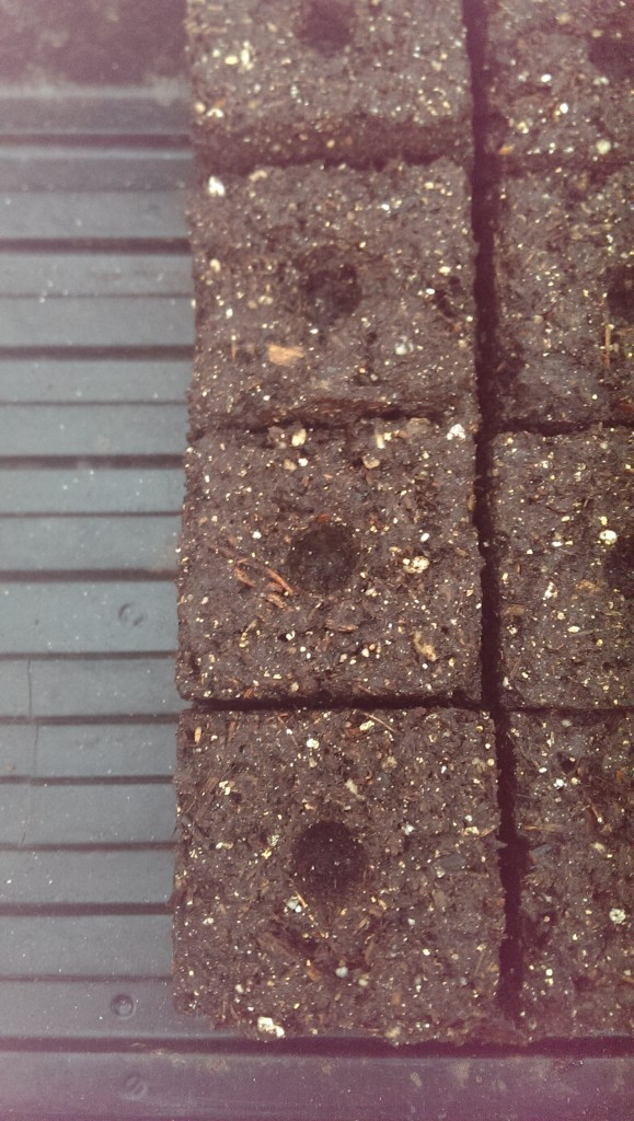 These soil blocks are handy to make and use and 50 fit nicely into a 1020 flat.