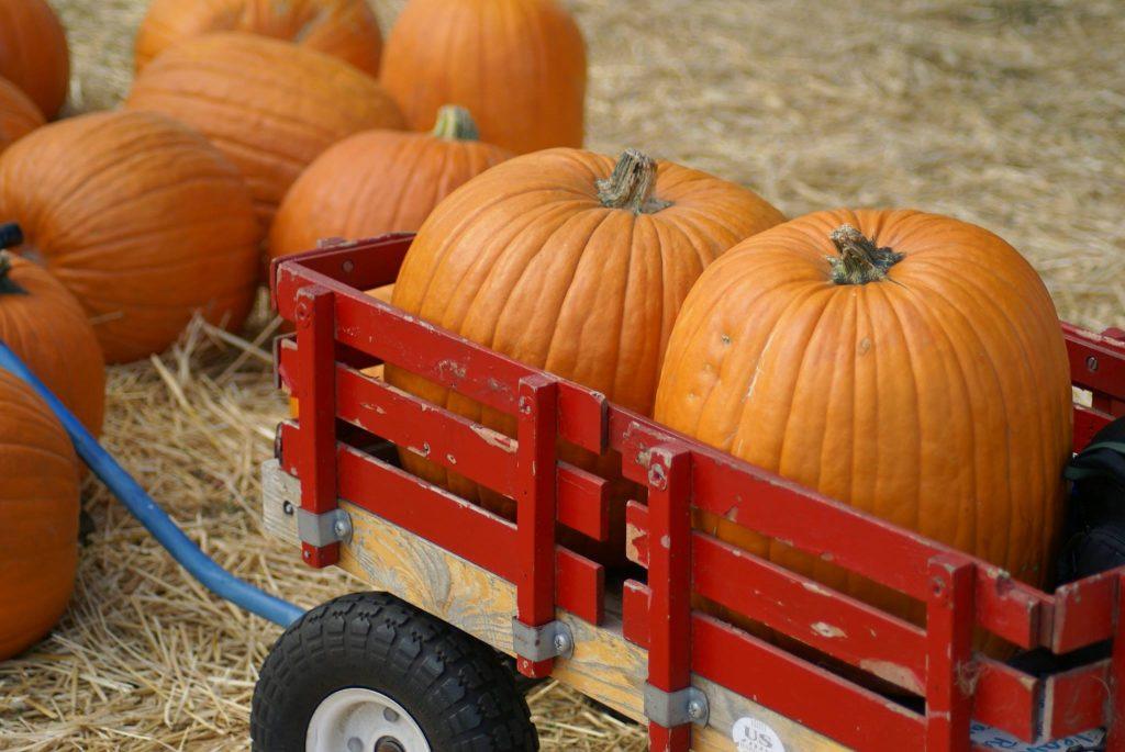 Fall on A Farm